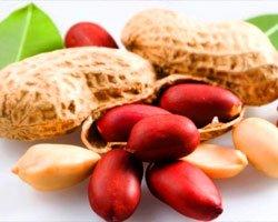 Крупные плоды арахиса, выращенного в теплице под розовым поликарбонатом ГРИНХАУС-НАНО.